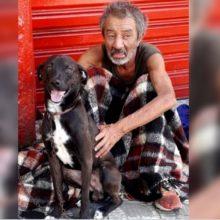 Morador de rua procura um dono responsável pelo seu cão. Ele quer o melhor para ele