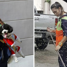 Mulher leva seu cão junto com ela para o trabalho todos os dias para que ele não fique sozinho
