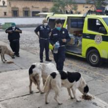 Pessoas aderiram a iniciativa de distribuir alimentos para cães de rua