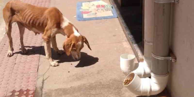 Pessoas ajudam alimentar animais de rua durante o isolamento