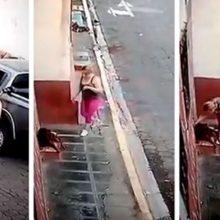 Uma mulher encontra cachorro abandonado e ferido, para o carro e o resgata