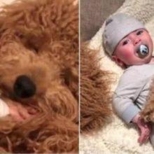 Vídeo de bebê dormindo juntinho com cão faz muito sucesso na internet