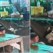 Vovó balança seu cão em uma rede para que ele não fique entendiado