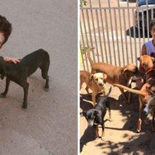Aos 17 anos, ele abriu seu abrigo para animais de rua. Já vem ajudando muitos cães e gatos