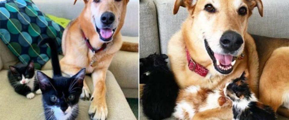 Cachorro adota gatinhos abandonados e cuida deles com muito amor e carinho