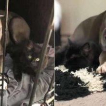 Cachorro adotado convence sua mãe humana a ficar com gatinho que ele adotou