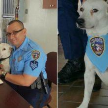 Cachorro de rua amigável entra em um departamento de polícia e é adotado