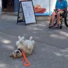 Cachorro deita no chão quando seu dono tenta ir embora do parque