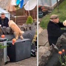 Cachorro escapa para visitar seu vizinho em isolamento social