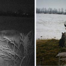 Cachorro fugiu de casa para passar dois dias com seu amigo cervo