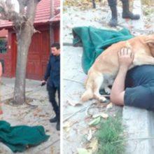 Cachorro vigia seu dono enquanto os paramédicos chegavam