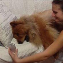 Cão chora em chamada de vídeo com sua dona, ele mostra muita saudade