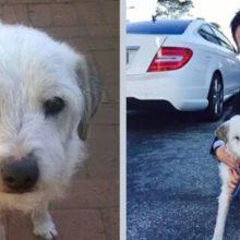 Cão de abrigo esperou 15 anos para ser adotado finalmente encontra um lar