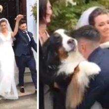 Cão espera do lado de fora da igreja para cumprimentar seus recém-casados