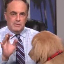 Cão interrompe transmissão ao vivo do seu dono que estava passando a previsão do tempo