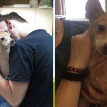Cão reencontra donos depois de 6 anos vivendo na rua, mostrou muita felicidade