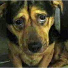 Casal viu uma foto de um cão triste e foi adotar ele, apesar do conselho do abrigo de não adotar