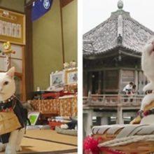 Conheça o templo japonês de gato o lugar mais bonito do mundo