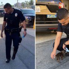 Filhote de cachorro pequeno abandonado nas ruas persegue policiais por ajuda
