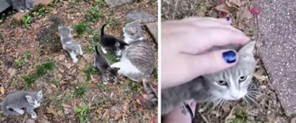Gata de rua leva seus filhotes para conhecer mulher que a alimenta