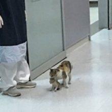 Gatinha leva seu filhote doente até o hospital e espera ser atendida
