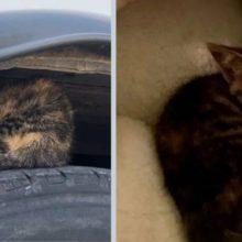 Gatinho é encontrado no pneu de um ônibus, ele abraça salvador e não desgruda