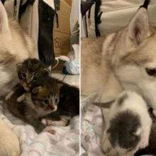 Gatinhos órfãos adotam cachorro achando que ela é a mãe deles