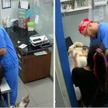 Gato defende cão quando veterinário foi dar vacina. Ao ouvir-lo chorar