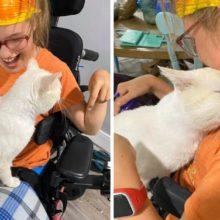 Gato pulou no colo de uma menina de cadeira de rodas e escolheu sua dona
