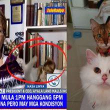 Gatos de estimação roubam a cena em transmissão ao vivo e vídeo faz sucesso