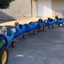 Homem de 80 anos constrói um trem de cachorro para levar cães de rua resgatados para passear