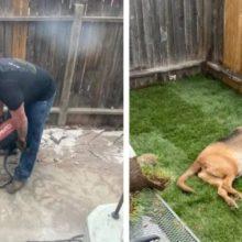 Homem trabalha fim de semana inteiro para dar ao cão da namorada um quintal merecido