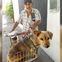 Idoso de 90 anos usa bicicleta para transportar seu cão com artrite até o veterinário