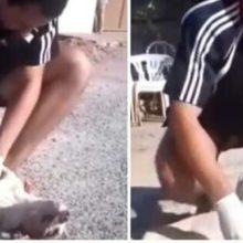Jovem estudante de veterinária salvou a vida de um cão de rua que tinha sido envenenado