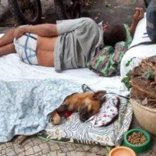 Morador de rua improvisa caminha para seu cachorro e comove as pessoas