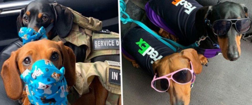 Motorista da FedEx leva seus cães para entregas após o fechamento da creche