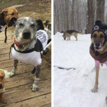 Mulher adota 6 cães com necessidades especiais e muda a vida deles