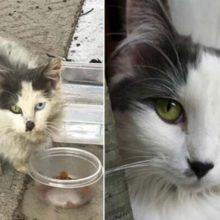 Um casal resgatou uma gatinha de rua de olhos lindos e ela se transformou