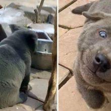 Um filhote de cachorro se parece muito com um gato e faz sucesso