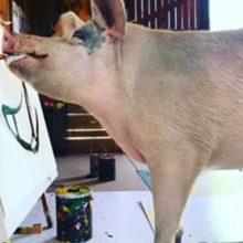 Uma porquinha resgatada pinta quadros que valem até R$ 15 mil
