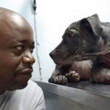 Cachorro dá o olhar mais doce para homem que o salvou