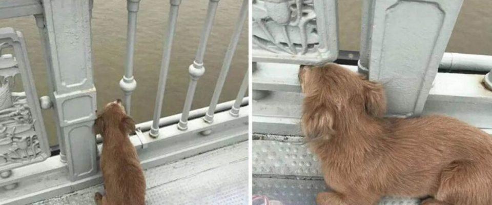 Cachorro espera seu dono em uma ponte depois que ele se suicidou pulando no rio