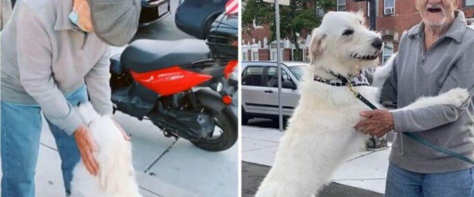 Cachorro reencontra com seu vizinho favorito que estava doente há meses