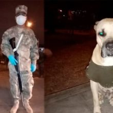 Cão abandonado se torna o melhor amigo de um soldado na sua ronda