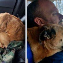 Cão de rua vê uma porta de carro aberta, imediatamente pula dentro e ganha um novo dono