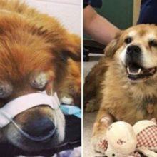 Cão idoso não deixa seu dono para trás no incêndio, os dois foram resgatados