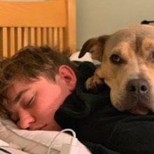 Cão resgatado com medo dorme no quarto do seu humano e percebe que está seguro