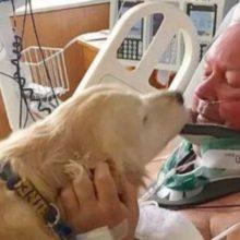 Cão salvou a vida do seu dono deitando sobre ele em condições de congelamento