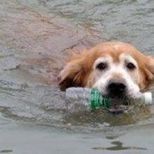 Cãozinho retira mais de 2 mil garrafas plásticas ao longo de 10 anos