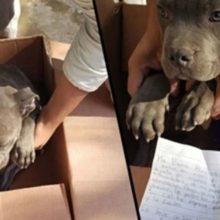Criança deixa cão em um abrigo para protegê-lo do seu pai e deixa uma carta
